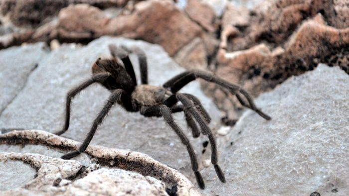 Which Spider Bites Cause Blisters?