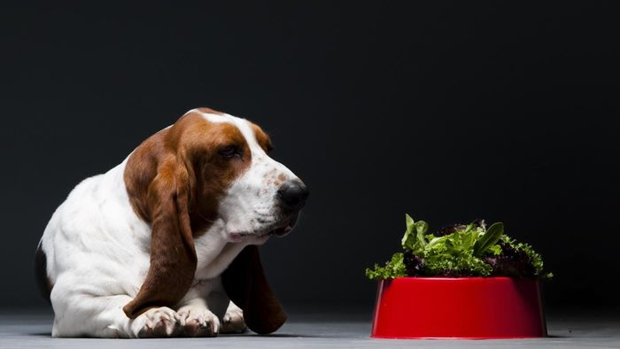 Is Spinach Good for Dogs?