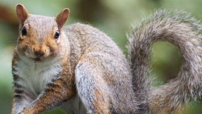 What Are Some Squirrel Adaptations?