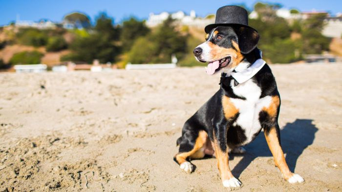 What Are Some of the Standard Top 100 Male Dog Names?