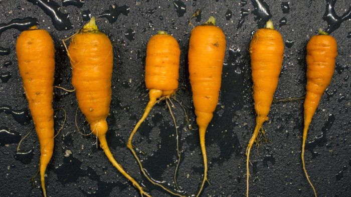 Where is starch stored within plants?