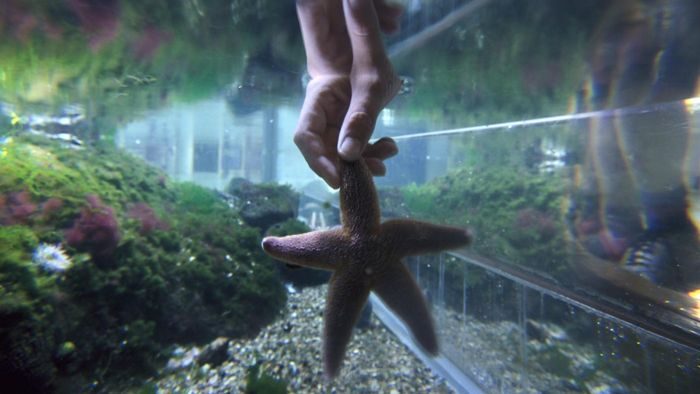 Does a starfish make a good pet?