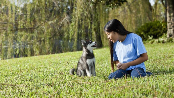 How Do You Start an Alaskan Klee Kai Rescue?