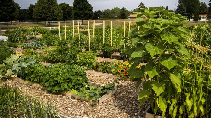 How Do You Start a Community Garden?