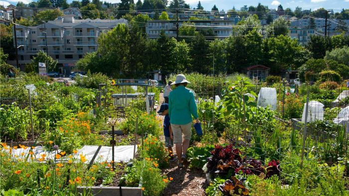 How Do You Start an Urban Farm?
