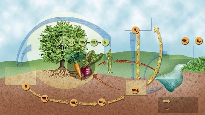 What Are the Steps of the Nitrogen Cycle?