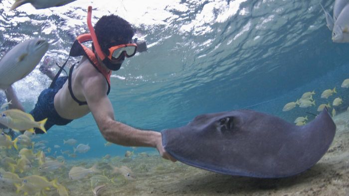 Where Is It Legal to Own a Stingray As a Pet?