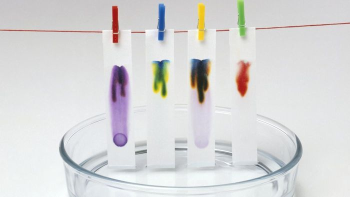 What Stores Sell Litmus Paper?