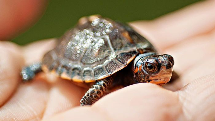 What Is the Symbolic Meaning of a Turtle?