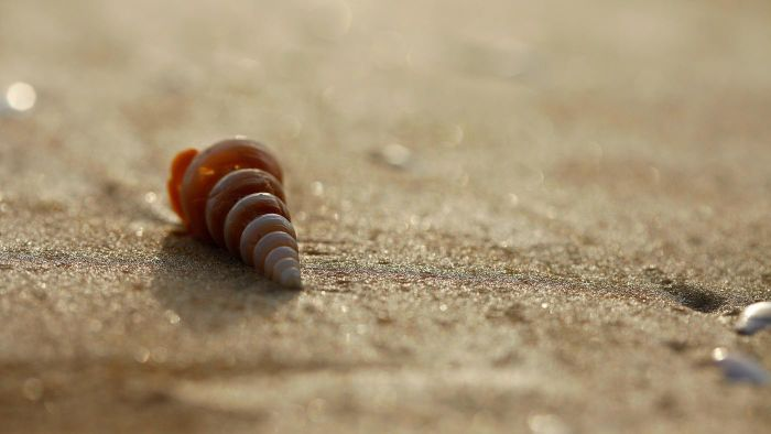 What Is The Symbolism Of Seashells Reference
