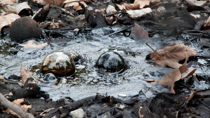What Are Tar Pits?