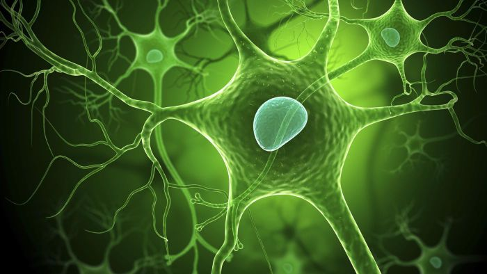 What Is the Term Used to Describe a Cell's Ability to Maintain a Stable Internal Environment?