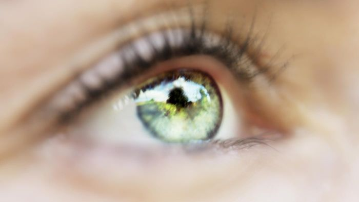 What regulates the amount of light entering the eye?