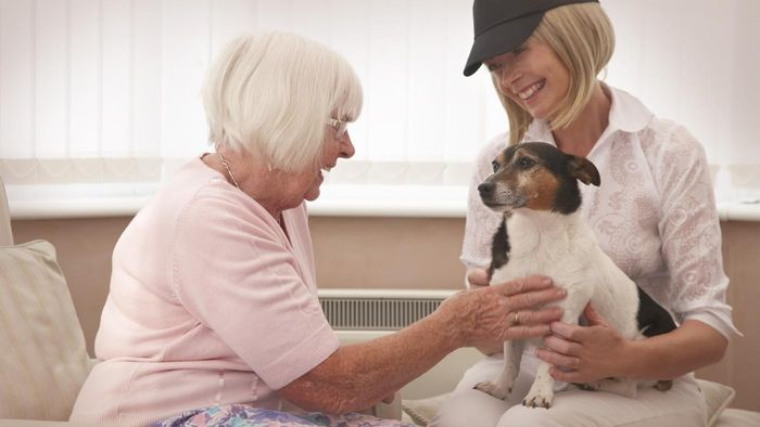 How Do You Get a Therapy Dog?