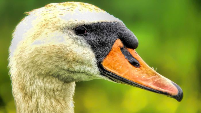 What Are Three Characteristics of a Waterfowl?
