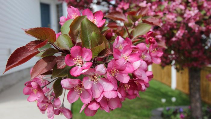 What is the best time of year to plant cherry tree seeds?