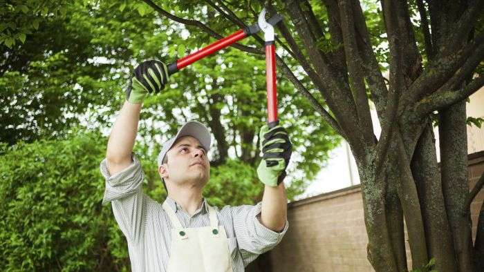 What tools do you use to prune large trees?