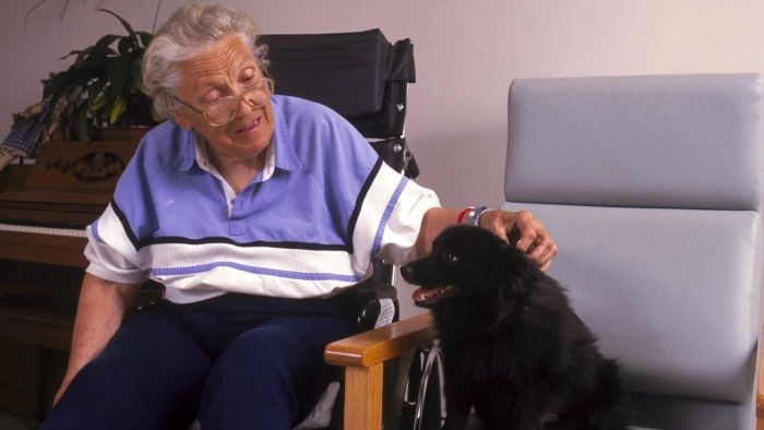How Do You Train a Therapy Dog?