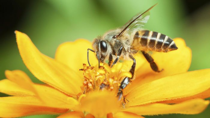 What Are Some Treatment Options for Bee Stings?