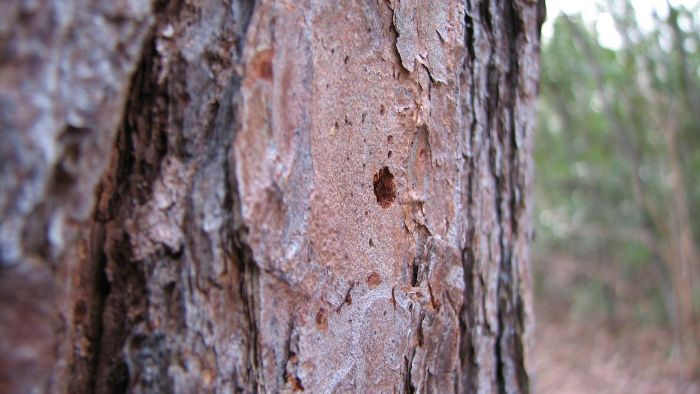 How Are Trees With Bark Damage Healed?