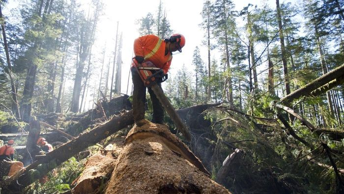 What Trees Bring the Best Logging Prices?