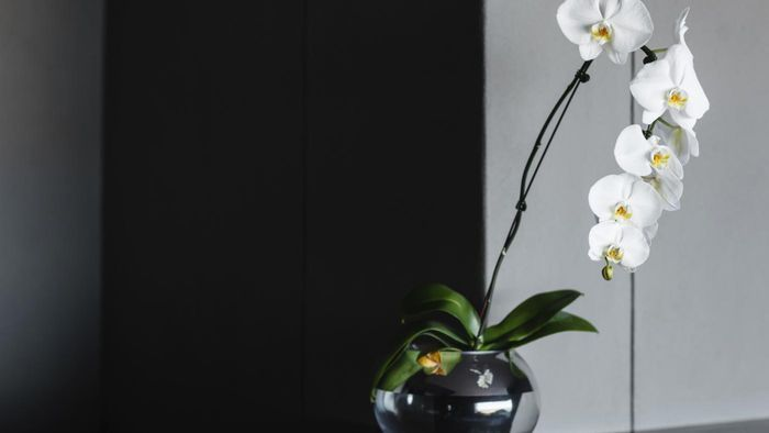 How Do You Trim an Orchid?