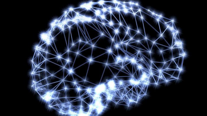 What Are the Two Types of Brain Cells?