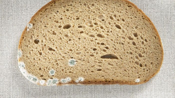 What type of bread molds the fastest?