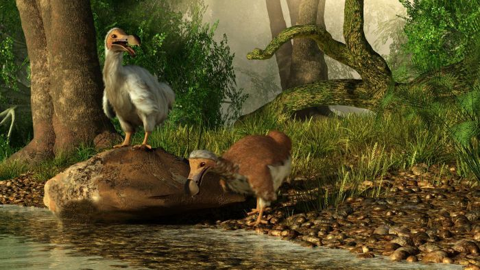 In What Type of Habitat Did the Dodo Bird Live?
