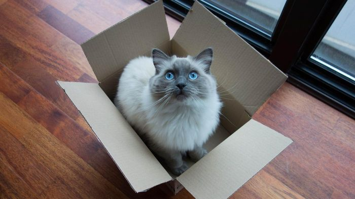 What Type of Personality Does a Ragdoll Cat Have?