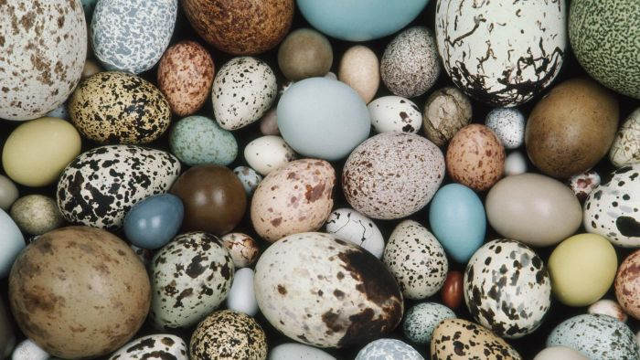 Which Animals Lay Eggs?
