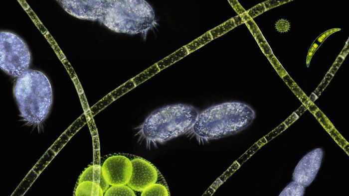 What Types of Organisms Live in Pond Water?
