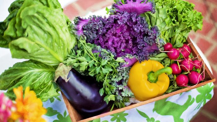 Diets and Health: A Plant-Based Diet