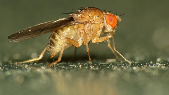 Does Vinegar Keep Flies Away?
