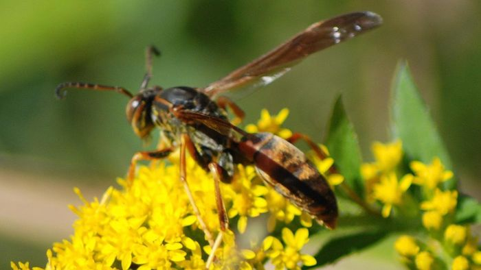 Do Wasps Die After They Sting You?