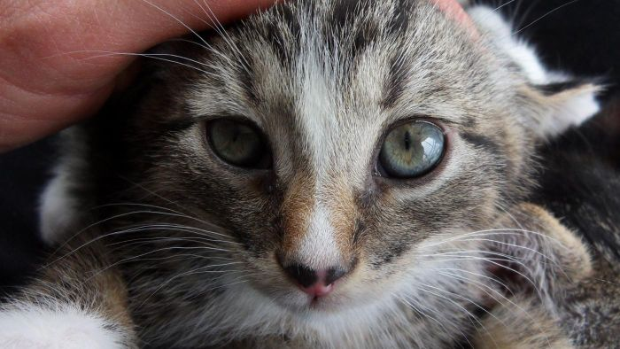 What Is the Best Way to Find Kittens for Sale?