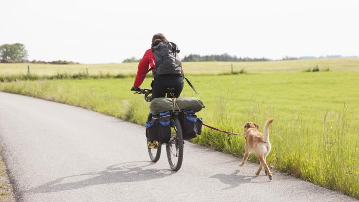 What Is the Best Way to Use a Dog Bike Leash?