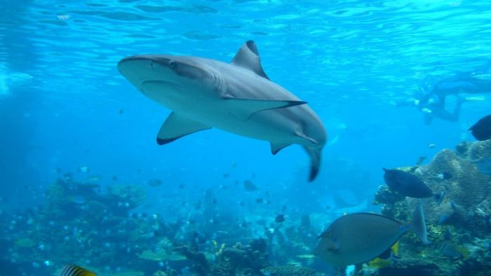 What Websites Provide the Best Information on Sharks?