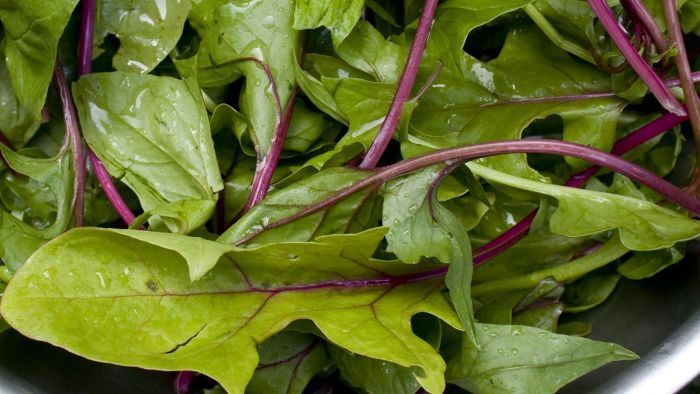 Are there weight loss benefits of spinach extracts?