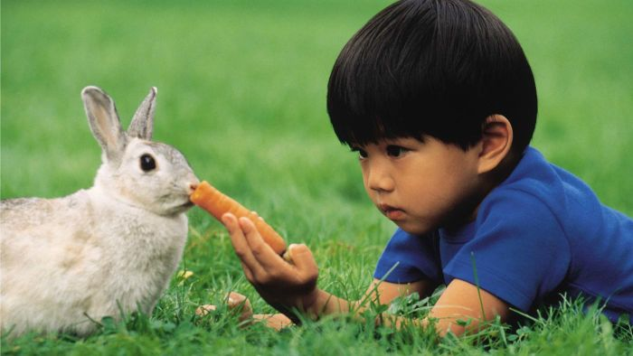 What Does a Rabbit Eat?