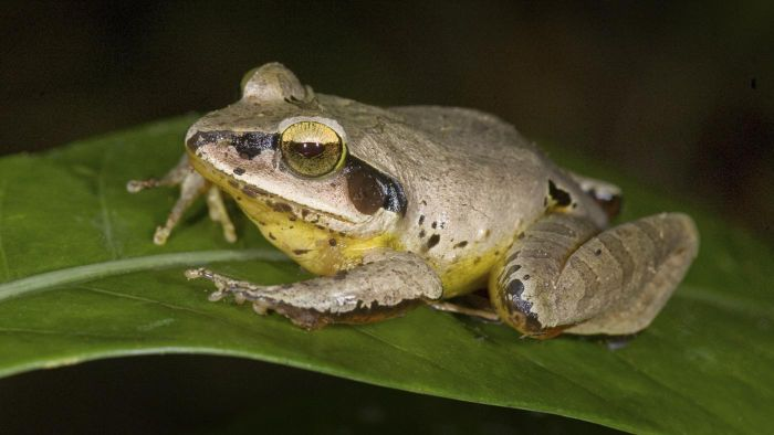 What Is the Symbolic Meaning of Seeing a Frog?