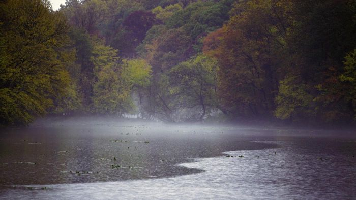 What effect does acid rain have on the environment?