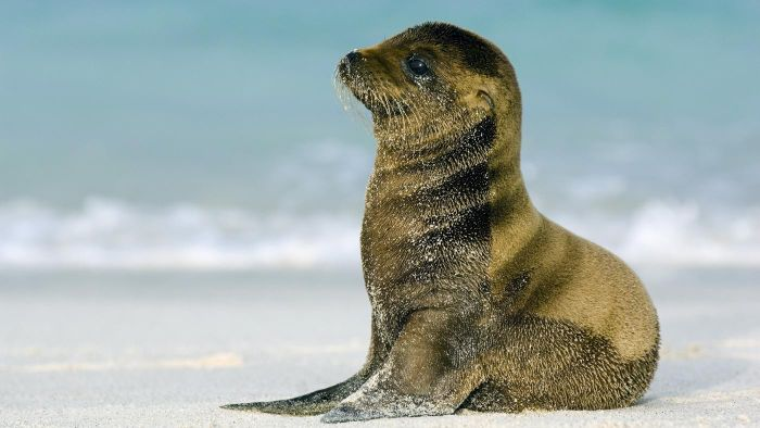 What Is a Baby Sea Lion Called?