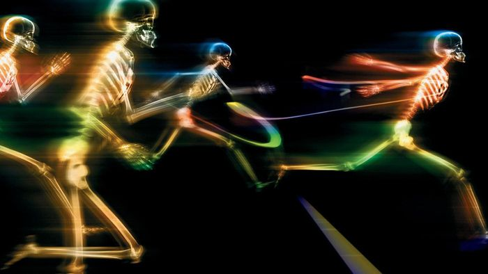What Is the Function of the Skeleton?