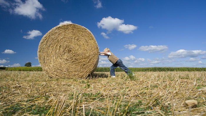 What Is the Size of a Standard Hay Bale?