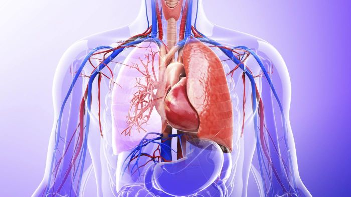 What Role Do The Lungs Have In The Excretory System Reference
