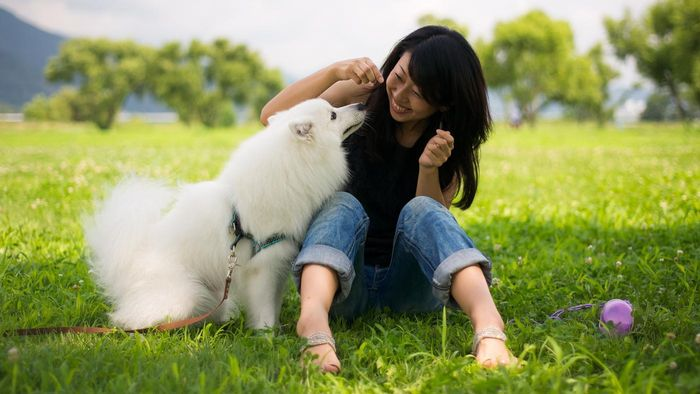 What Are Some All-White Dog Breeds?