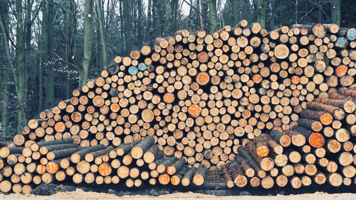 What Wood Dries the Fastest?