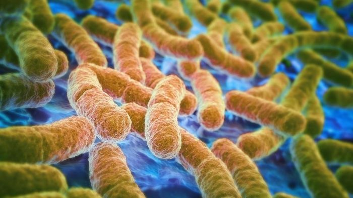 What Does the Word Pathogen Mean?