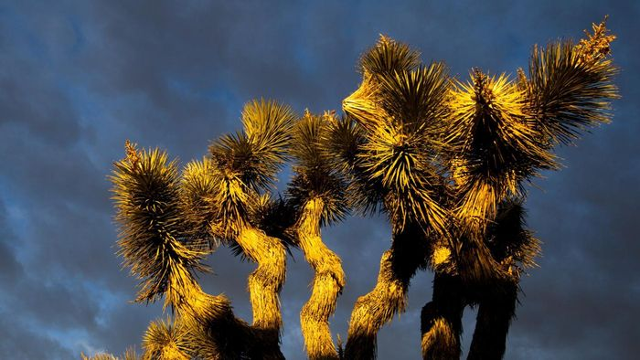 Are Yucca Plants Outside Plants?